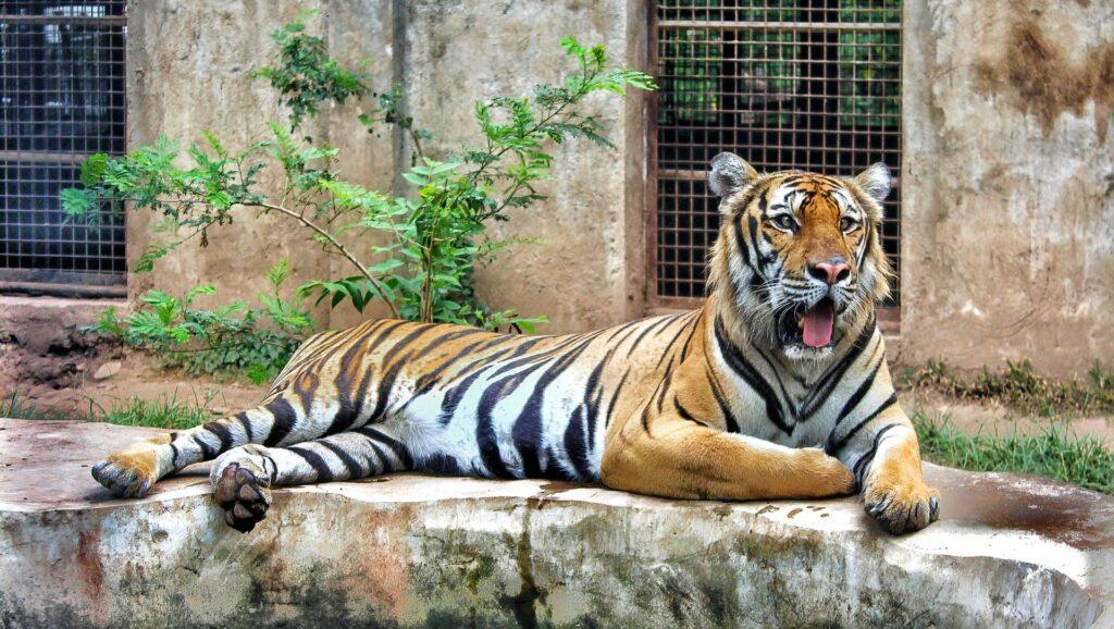 動物園デート 注意点